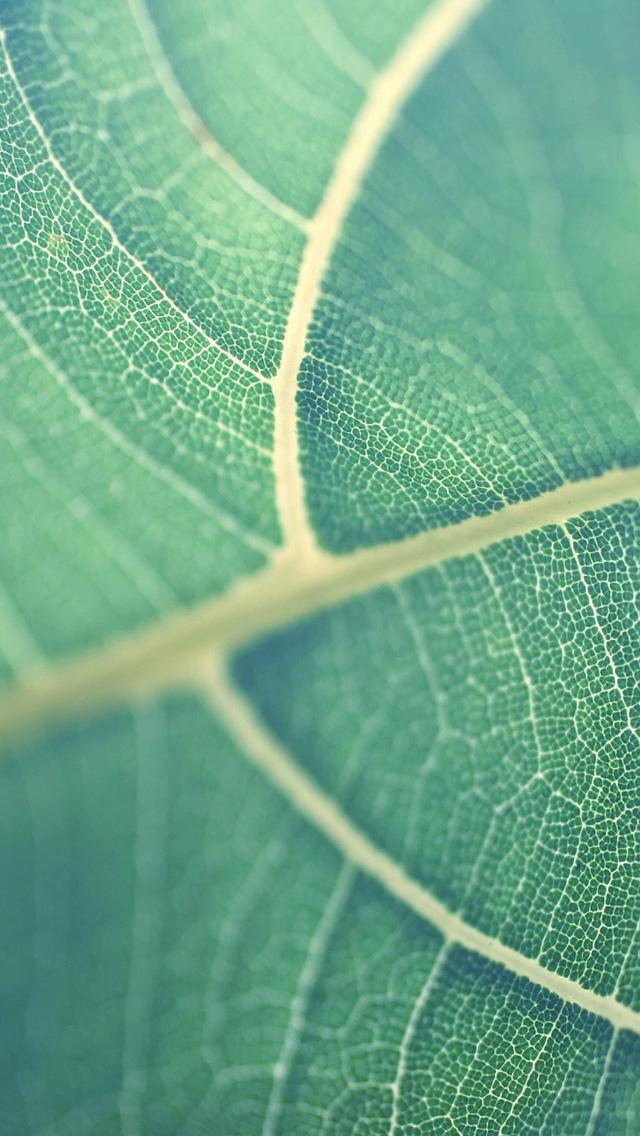 Leaf-iP5
