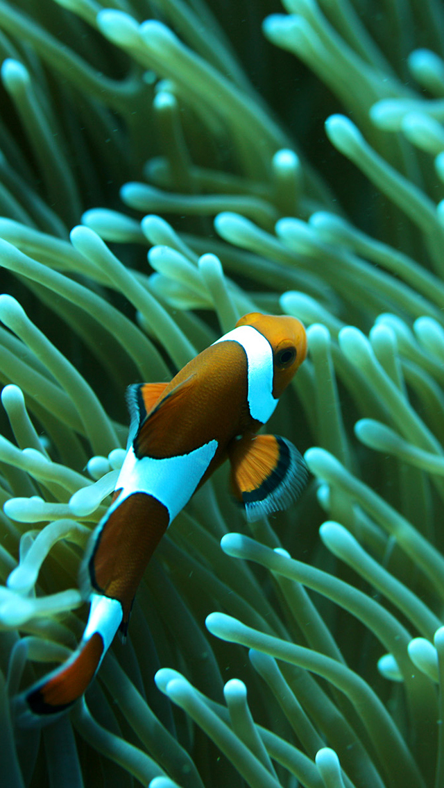 10 Clown Fish and Anemone