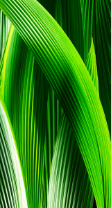 iOS7 official wallpapers, iOS7 new wallpapers, iOS7 iphone wallpapers (7)